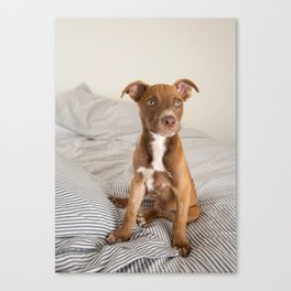 Fawn Colored Puppy on Bed Canvas Print