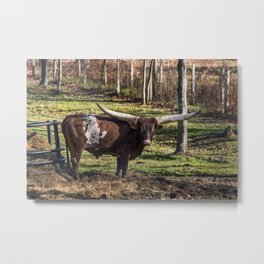 Living Treasures Animal Park - Longhorn Cow Metal Print