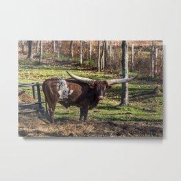 Living Treasures Animal Park - Longhorn Cow Metal Print