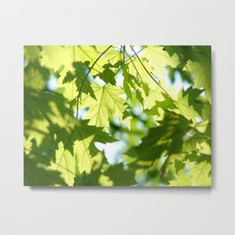 Green Summer Maple Leaves Metal Print