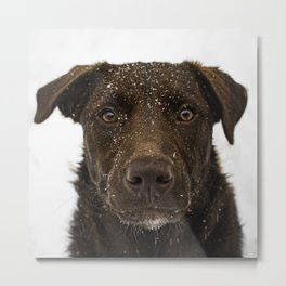 Coco's First Snow Metal Print