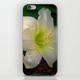 Glowing white daylily flowers - Hemerocallis Indy Seductress iPhone Skin