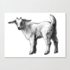 Goat baby G147 Canvas Print