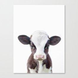 Baby Cow Portrait Canvas Print