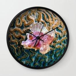 Pink Scorpionfish Wall Clock