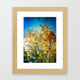 Rainbow of leaves Framed Art Print