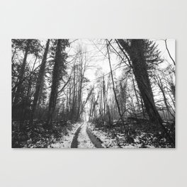 naked trees Canvas Print