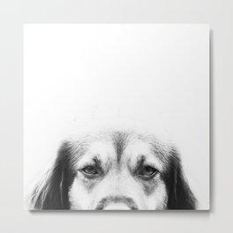 Dog portrait in black & white Metal Print