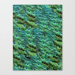 Peacock Feather Waterfall Canvas Print