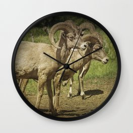 Bighorn Sheep along a Roadside in the Black Hills Wall Clock