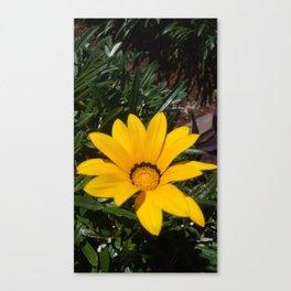 Yellow Flowers, Ripe Season, Welcome Spring! Canvas Print
