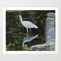 Fowl Reflections Art Print
