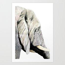 Elephant Gaze Art Print