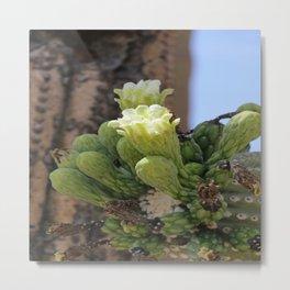 Saguaro Cacti Blossoms Metal Print