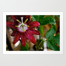 the flower Art Print