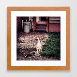 Baby White Framed Art Print