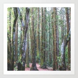 Moss & Redwoods Art Print