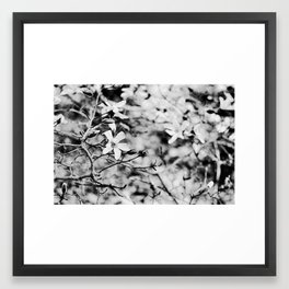 Blooms and Buds Framed Art Print