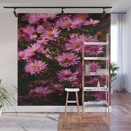 Wild Chrysanthemum Wall Mural