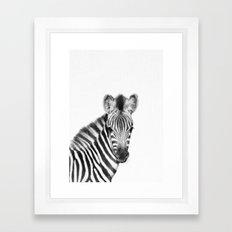 Baby Zebra [safari animals_cute animals_baby animals_little animals_african animals] Framed Art Print