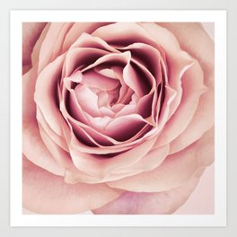 My Heart is Safe with You, My Friend - pale pink rose macro Art Print