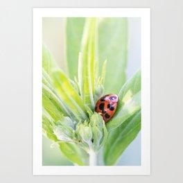 Ladybuds Art Print