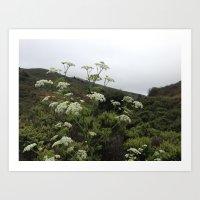 Wildflower Hills Photograph Art Print