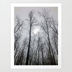 Bare Trees  series (2) Art Print