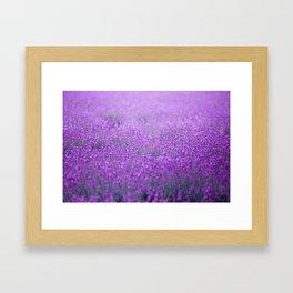 Rain on Lavender Framed Art Print