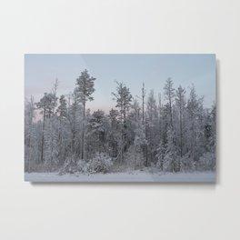 Karelian Trees Metal Print