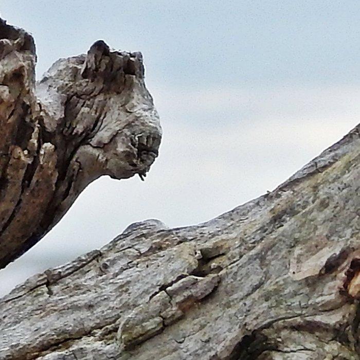 Natural Driftwood Leggings