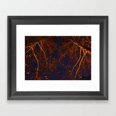 through the trees Framed Art Print