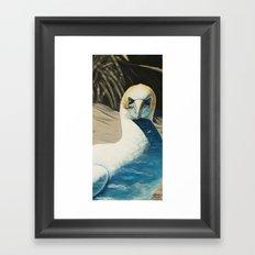 Gannet Framed Art Print