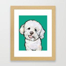 Gracie the Bichon Framed Art Print