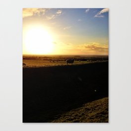 Sheep - The Hill of Tara Canvas Print