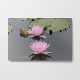 Lilly pads in bloom Metal Print