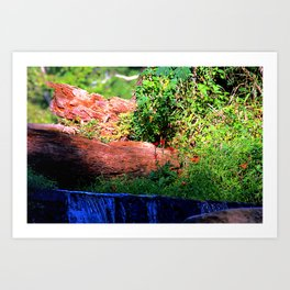 Mountain Spring Art Print