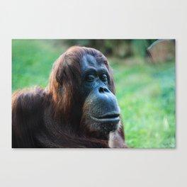 Viennese Orangutan Canvas Print
