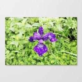 Purple Iris Flower With Raindrops Canvas Print