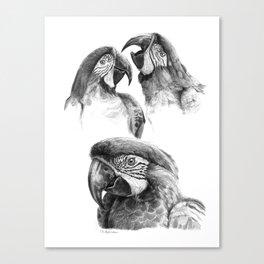 Macaw study SK0114 Canvas Print