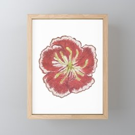Red Sweet William Framed Mini Art Print