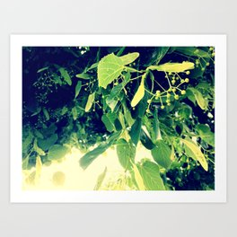 Nature's Canopy Art Print