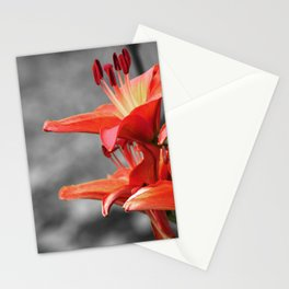 Orange Lily Flower Blossom, Lilium Digital Photography Close up, Black and White Background Stationery Cards
