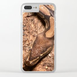Bella the Ball Python Clear iPhone Case
