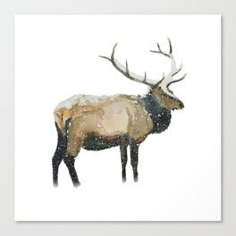 Stag in a Snow Storm Canvas Print