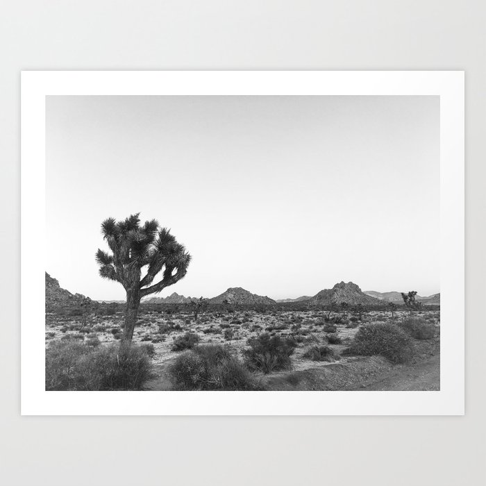 JOSHUA TREE / California Desert Kunstdrucke