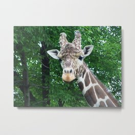Whatcha Looking At? Metal Print