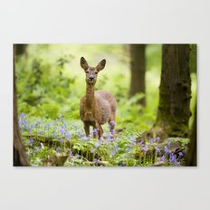Roe Deer in a Bluebell Wood Canvas Print