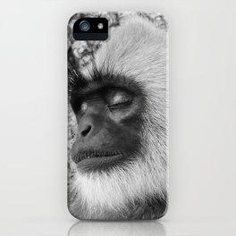 "Close-up ""black-faced"" Hanuman langurs iPhone Case"