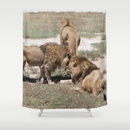 Male Lions Shower Curtain